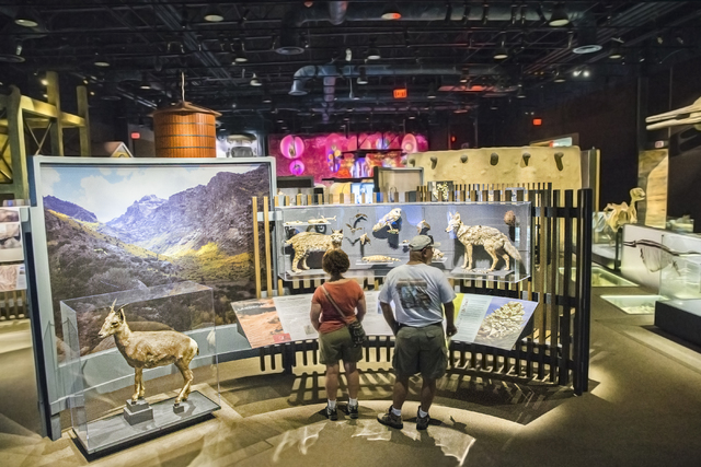 Rose Coggins, left, and Steve Grevich peruse a nature exhibit at the Nevada State Museum, Las Vegas. (Benjamin Hager/Las Vegas Review-Journal)