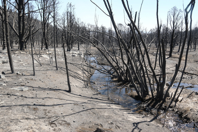 Strawberry Creek winds through a burned forest Thursday at Great Basin National Park, 300 miles northeast of Las Vegas. (Great Basin National Park)