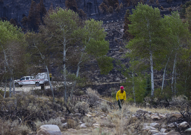A National Park Service employee walks through an area damaged by the Strawberry Fire at Great Basin National Park on Thursday, Aug. 25, 2016. Chase Stevens/Las Vegas Review-Journal Follow @csstev ...