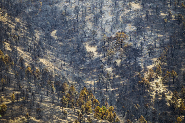 Damage from the Strawberry Fire is shown at Great Basin National Park on Thursday, Aug. 25, 2016. Chase Stevens/Las Vegas Review-Journal Follow @csstevensphoto