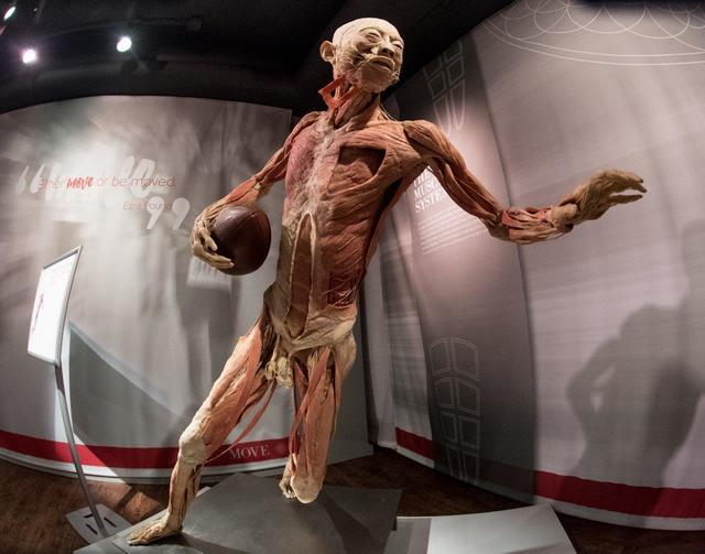 """The grand opening of the exhibit """"Real Bodies"""" at Bally's on Wednesday, Aug. 31, 2016, in Las Vegas. (Tom Donoghue)"""
