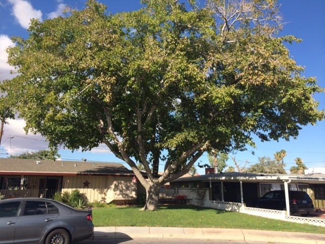 Planting Under A Mulberry Tree Has Lot More Restrictions Because Of The Dense Shade It
