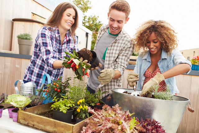 THINKSTOCK By planting a rooftop garden, these friends are taking an initiative in living more sustainable lives.