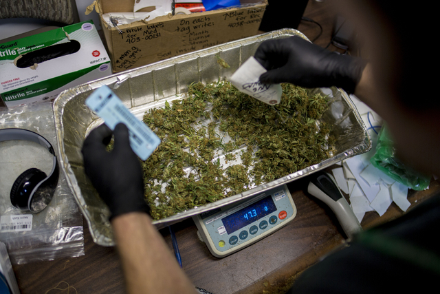 Marijuana buds are weighed and packaged in Medicine Man, a family owned dispensary in Denver Colorado, Friday, Sept. 2, 2016.  Elizabeth Page Brumley/Las Vegas Review-Journal Follow @ELIPAGEPHOTO