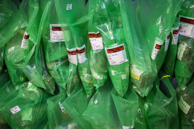 Marijuana buds wait to be distributed for sale in packages in Medicine Man, a family owned dispensary in Denver Colorado, Friday, Sept. 2, 2016.  Elizabeth Page Brumley/Las Vegas Review-Journal Fo ...