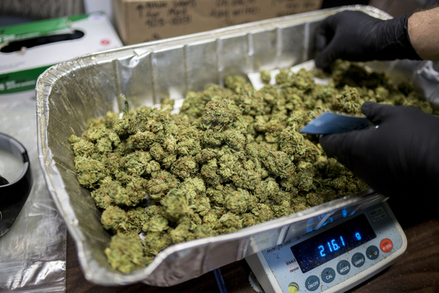 Marijuana buds are weighed in Medicine Man, a family owned dispensary in Denver Colorado, Friday, Sept. 2, 2016. Elizabeth Page Brumley/Las Vegas Review-Journal Follow @ELIPAGEPHOTO