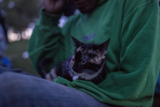 The cat Mia is held by his owner Izzy Farrell in Commons Park Friday, Sept. 2, 2016, Denver Colorado. Elizabeth Page Brumley/Las Vegas Review-Journal Follow @ELIPAGEPHOTO