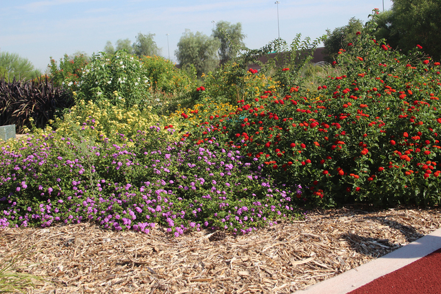 COURTESY Native plants are more likely to survive in your landscape, they can be beautiful and keep costs down.