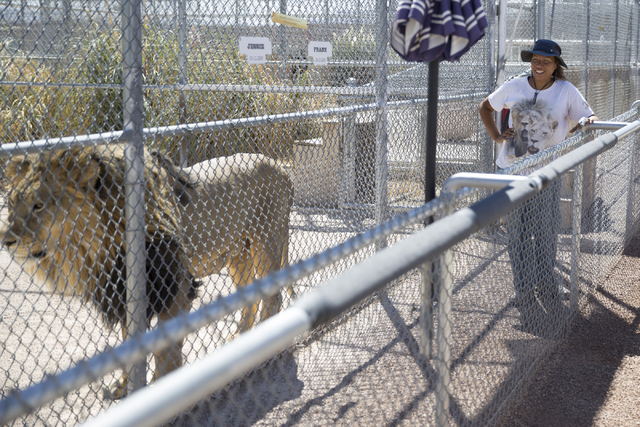 Cristina Cuellar, manager at the Lion Habitat Ranch, gives a tour of the Lion Habitat Ranch in Henderson on Wednesday, Sept. 7, 2016, in Las Vegas. Erik Verduzco/Las Vegas Review-Journal Follow @E ...