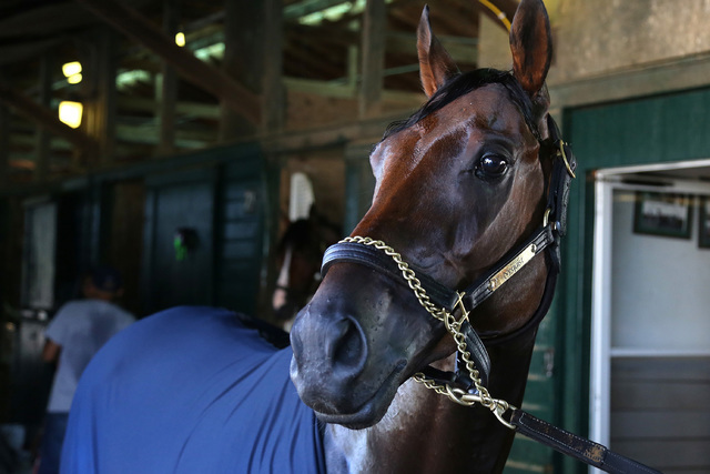 2016 Kentucky Derby winner Nyquist is shown in a barn at Monmouth Park in Oceanport, N.J., Thursday morning July 28, 2016. Nyquist is expected to run in the $1,000,000 Haskell Invitational at Monm ...