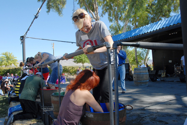The Oct. 1-2 Grape Stomp, a popular autumn event at Pahrump Valley Winery, celebrates the grape harvest in Pahrump. Two-person teams compete crushing grapes in a barrel as part of the event. (Hora ...