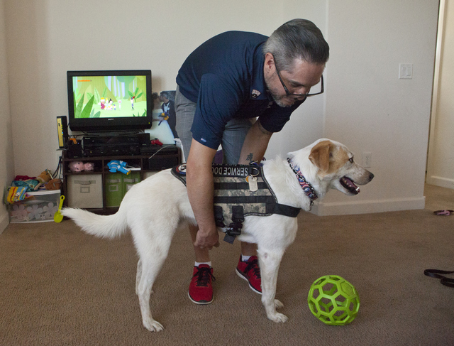 Army veteran Randy Dexter puts on Champion's service dog vest at their home in Henderson on Friday, Sept. 2, 2016. Dexter suffered traumatic brain injury (TBI) while in the Army and now is part of ...