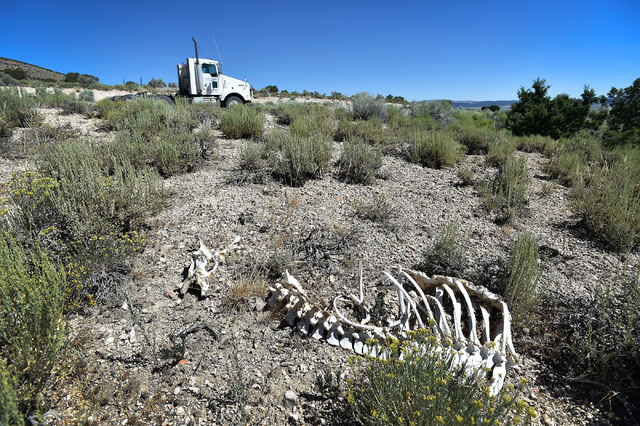 The skeleton remains of a large animal, perhaps a deer or antelope, lays near U.S. Highway 50 in White Pine County Tuesday, July 12, 2016. The state of Nevada created a tourism program for motoris ...