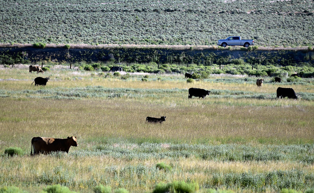 "A motorist travels by a pasture of cows along U.S. Highway 50 west of Eureka, Nev. Wednesday, July 13, 2016. Since a 1986 Life magazine which dubbed the Nevada portion of the road  ""The Loneliest  ..."