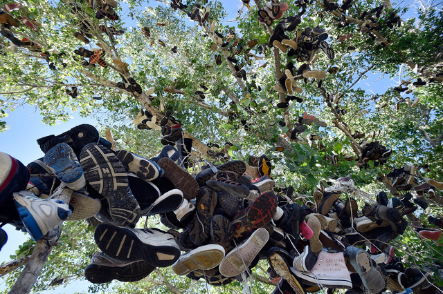 Hundreds of shoes hang from a cottonwood tree Wednesday, July 13, 2016, in Middlegate, Nev. Locals say a fight between newlyweds, where the groom tossed his new bride's shoes into the tree, was th ...