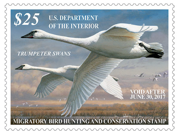 Hunters who are 16 and older must have a 2016-17 Federal Duck Stamp in their possession when hunting migratory waterfowl this season. The artwork for this stamp is the work of Joseph Hautman. Imag ...