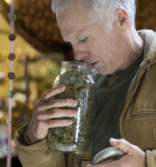 Tim Blake checks the aroma of a jar of medical marijuana at his dispensary near Laytonville, Calif. (Rich Pedroncelli/The Associated Press)