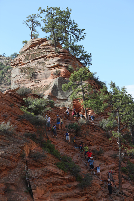 A line of hikers scrambles toward the peak of Angels Landing during the last half-mile stretch of the strenuous trail in Utah's Zion National Park. (Brett Le Blanc/Las Vegas Review-Journal)