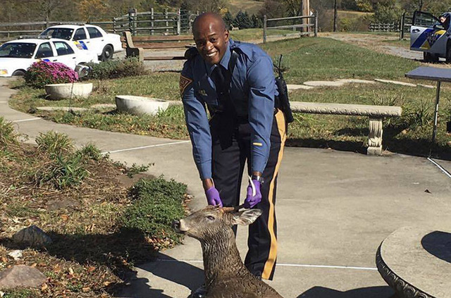New Jersey State Trooper Dwayne Phillips poses with a deer he rescued when appeared to be drowning in a swimming pool at a Warren County home. (New Jersey State Police via AP)