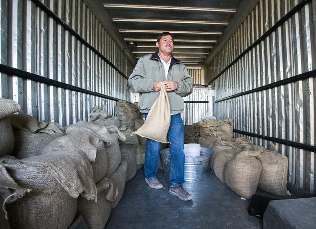 Dayer LeBaron, owner of WholesalePineNuts.com, carries a bag of pine nuts near Baker, Nev., on Wednesday, Sept. 28, 2016. (Jeff Scheid/Las Vegas Review-Journal Follow @jeffscheid)