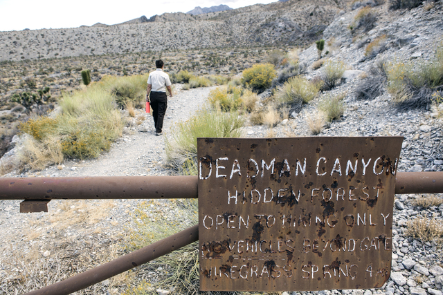 U.S. Fish & Wildlife Service refuge manager Amy Sprunger  walks on The Hidden Forest Trail in the  Desert National Wildlife Refuge on Friday, Sept. 30, 2016. The Air Force prepares to hold pub ...