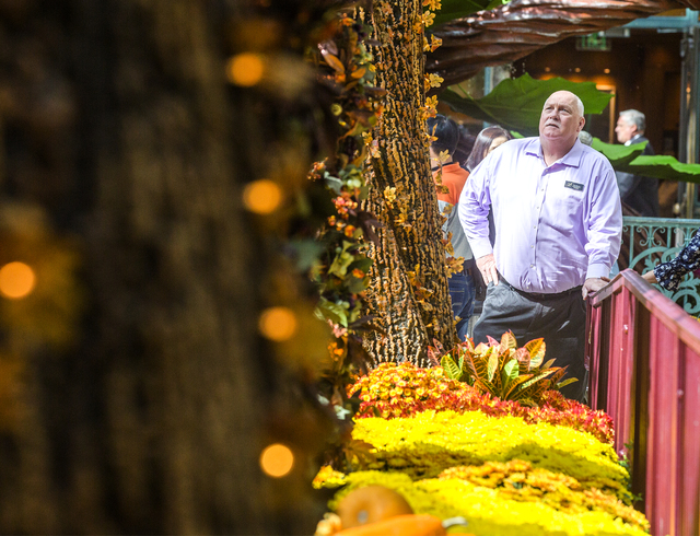 Jerry Bowlen, executive director of horticulture for MGM Resorts, stands in the Bellagio Conservatory on Thursday, Oct. 6, 2016. The fall display debuted on Sept. 25 and will be up until Nov. 25.  ...