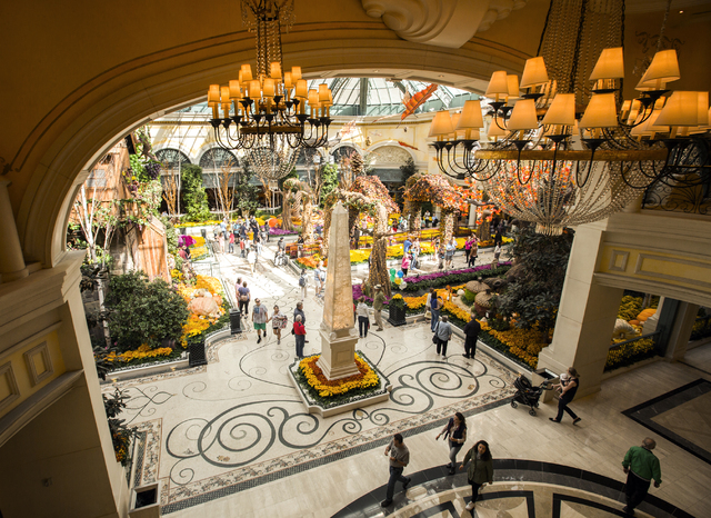 This is a view of the Bellagio Conservatory  from the second floor at the Spa, Fitness & Fitness at the Bellagio on Thursday, Oct. 6, 2016. The fall display debuted on Sept. 25 and will be up  ...