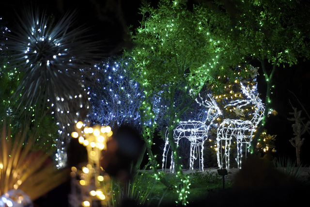 Lighted Cacti And Other Decorations Are Seen During The Annual Cactus Lighting Ceremony At Ethel M