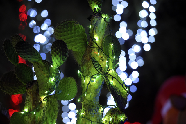A lighted cactus is seen during the annual cactus lighting ceremony at Ethel M Chocolates on Tuesday, Nov. 15, 2016, in Henderson. (Sam Morris/Las Vegas News Bureau)