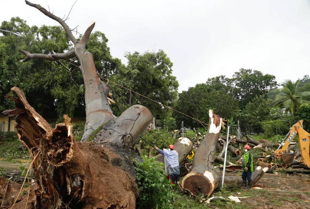 Workers cut a tree that fell and killed a boy outside a school in Panama City, Tuesday. (Arnulfo Franco/AP)