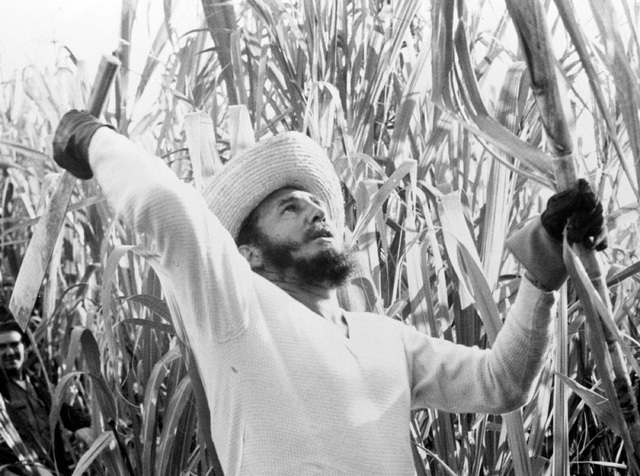 Prime Minister Fidel Castro went cane cutting with thousands of other volunteer workers, and official announcements said he sliced off over 9,000 pounds of cane in 1961. (AP Photo)
