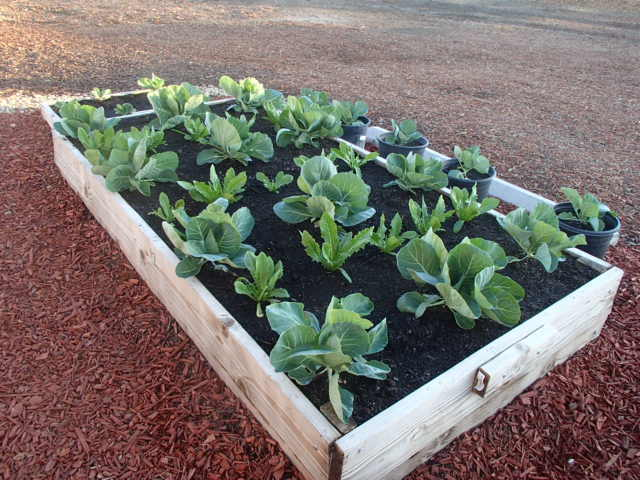 COURTESY Raised beds in full sun have the best chance of germinating seed during cold weather.
