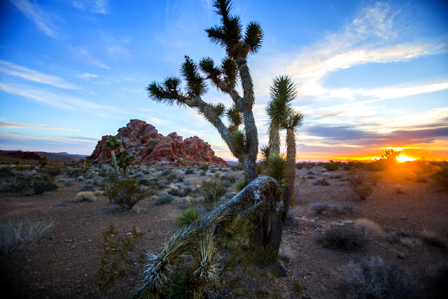 Gold Butte area as seen at sundown Thursday, May 22, 2014. The Gold Butte Region, administered by the BLM and the U.S. National Park Service, is about 2 1/2 hours east of Las Vegas. The area is po ...