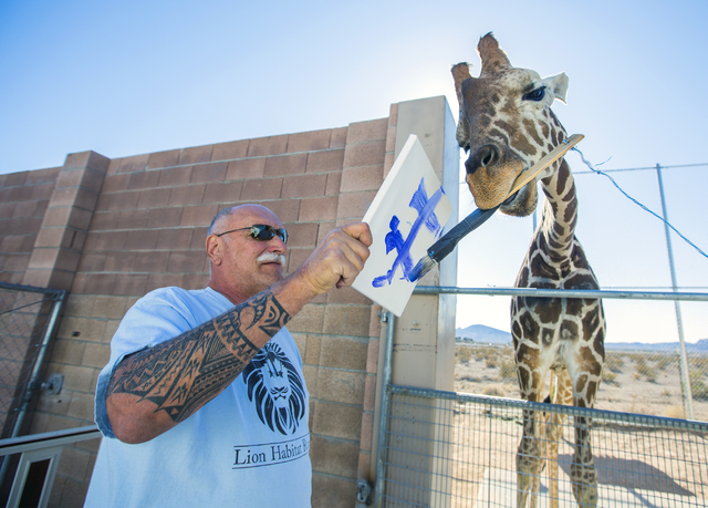 Keith Evans, owner of The Lion Habitat Ranch in Henderson, holds a canvas while Ozzie, the giraffe, paints on Friday, Nov. 25, 2016. The facility recently acquired the giraffe from the Tanganyika  ...