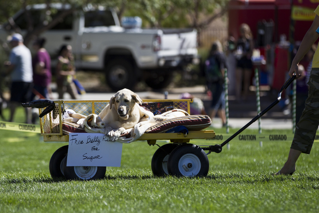 A dog rests on top of a cart as he is pulled around during the Family, Fur and Fun Festival at Exploration Park on Saturday, Oct. 15, 2016, in Las Vegas. (Erik Verduzco/Las Vegas Review-Journal Fo ...