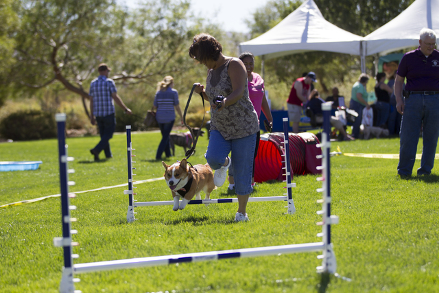 Susan Unaite with her dog Baby run an agility course during the Family, Fur and Fun Festival at Exploration Park on Saturday, Oct. 15, 2016, in Las Vegas. (Erik Verduzco/Las Vegas Review-Journal F ...