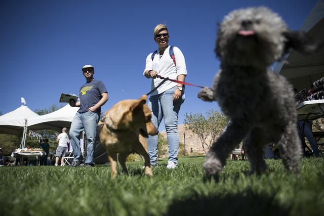 Karla Rodriguez walks her dogs during the Family, Fur and Fun Festival at Exploration Park on Saturday, Oct. 15, 2016, in Las Vegas. (Erik Verduzco/Las Vegas Review-Journal Follow @Erik_Verduzco)