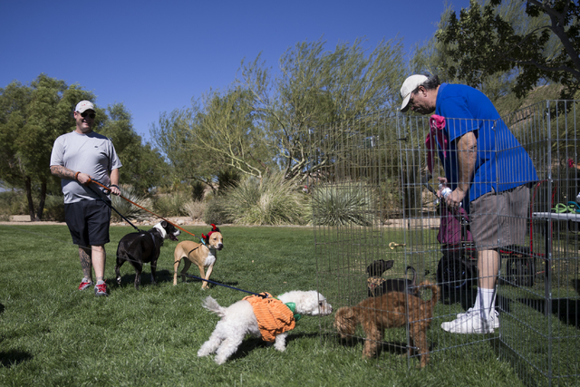 Dennis Davis, right, volunteer with On My Way Home Rescue, looks over adoptable dogs during the Family, Fur and Fun Festival at Exploration Park on Saturday, Oct. 15, 2016, in Las Vegas. (Erik Ver ...
