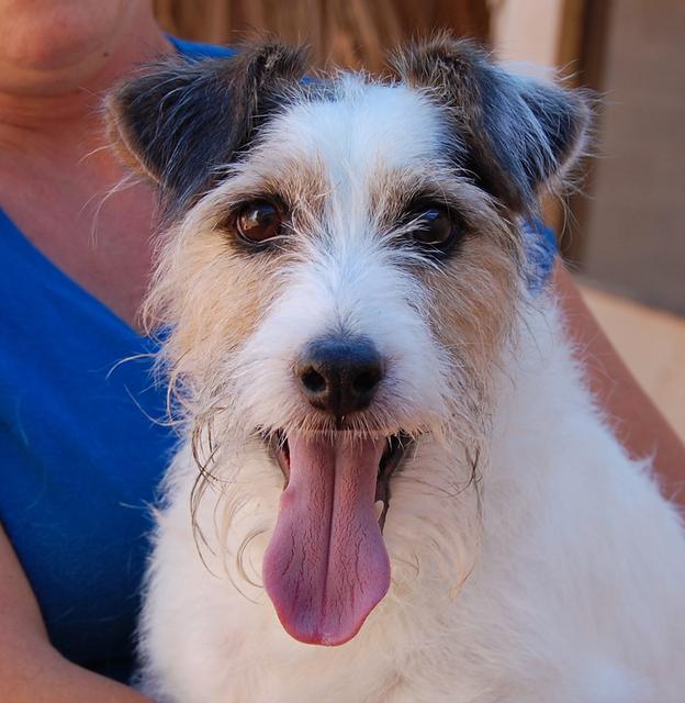 Steve, Nevada SPCA