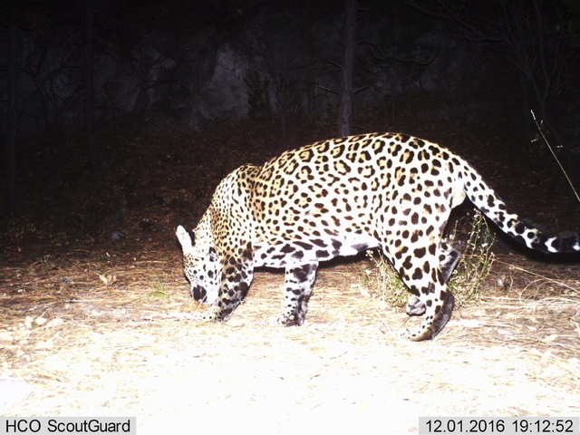A Camera Belonging To Fort Huachuca Army Installation Has Captured What Is  Likely The Second Wild