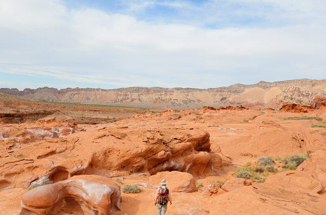 Ecologist Jim Boone leads a hike through the Gold Butte wilderness in Nevada. (Ronda Churchill for The Washington Post)