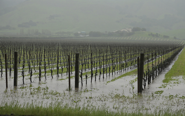 Runoff from heavy rain flows into vineyards along Highway 121 with the Gloria Ferrer Caves and Vineyards in the background in Sonoma, Calif., in 2016.  (AP Photo/Eric Risberg)