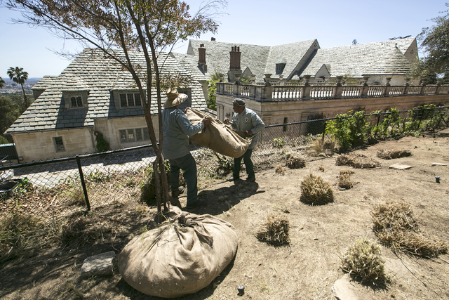 Gardeners remove grass plants trimmed ahead of planned watering reductions at the Greystone Mansion and Park in Beverly Hills, Calif., in 2015.  (AP Photo/Damian Dovarganes)