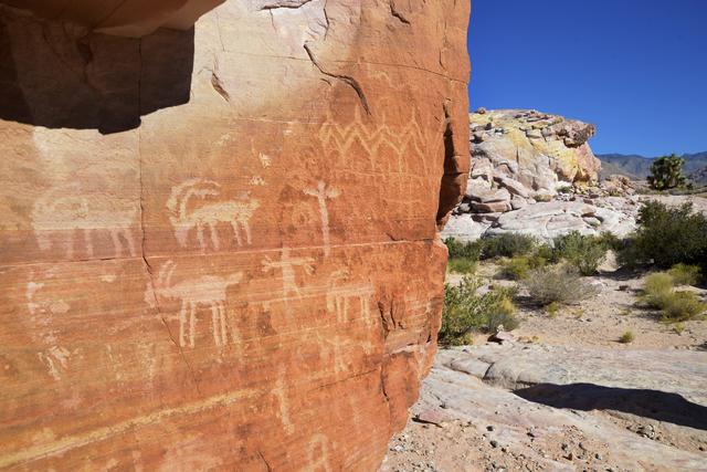 One of the many walls of petroglyphs in the Falling Man petroglyph area is seen in the Gold Butte region Saturday, Oct. 15, 2016, northeast of Las Vegas. Sam Morris/Las Vegas News Bureau
