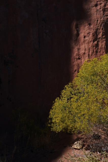 Light falls on a bush in the Gold Butte region Saturday, Oct. 15, 2016, northeast of Las Vegas.  Sam Morris/Las Vegas News Bureau