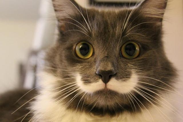 (@Hamilton the Hipster Cat)