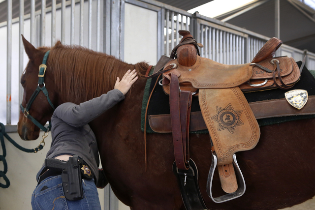 Maile Hanks, 29, a Las Vegas Police Department officer prepares her horse for training at the Mounted Unit training facility on Friday, Dec. 30, 2016, in Las Vegas. (Christian K. Lee/Las Vegas Rev ...