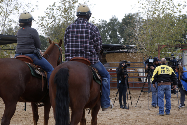 Las Vegas Police Department mounted officers sits as questions are answered from the media at the Mounted Unit training facility on Friday, Dec. 30, 2016, in Las Vegas. (Christian K. Lee/Las Vegas ...