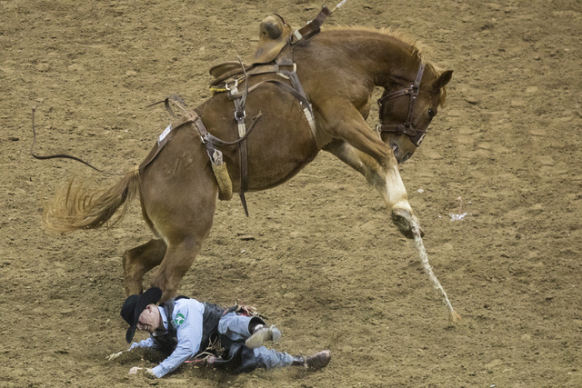 Jacobs Crawley is thrown from his horse during the saddle bronc riding event at the fourth day of the National Finals Rodeo at the Thomas & Mack Center in Las Vegas on Friday, Dec. 4, 2016. (M ...