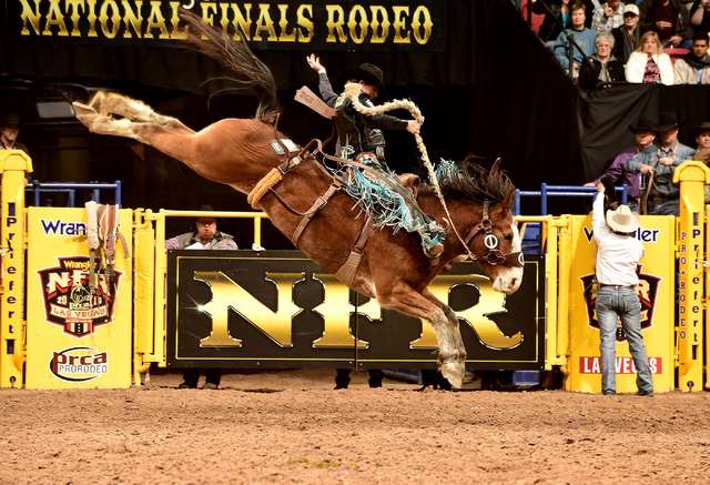 Ryder Wright puts together an 88.5-point ride aboard Vitalix Alpha Dog during the ninth go-round of saddle bronc riding Friday night at the Wrangler National Finals Rodeo. It was the fifth go-roun ...
